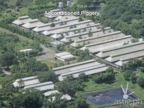 Hacienda Binay airconditioned piggery