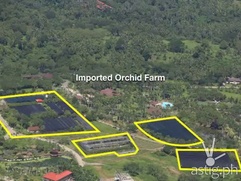 Hacienda Binay imported orchid farm