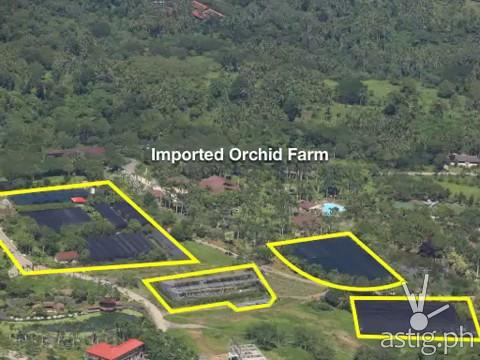 Hacienda Binay imported orchid farm