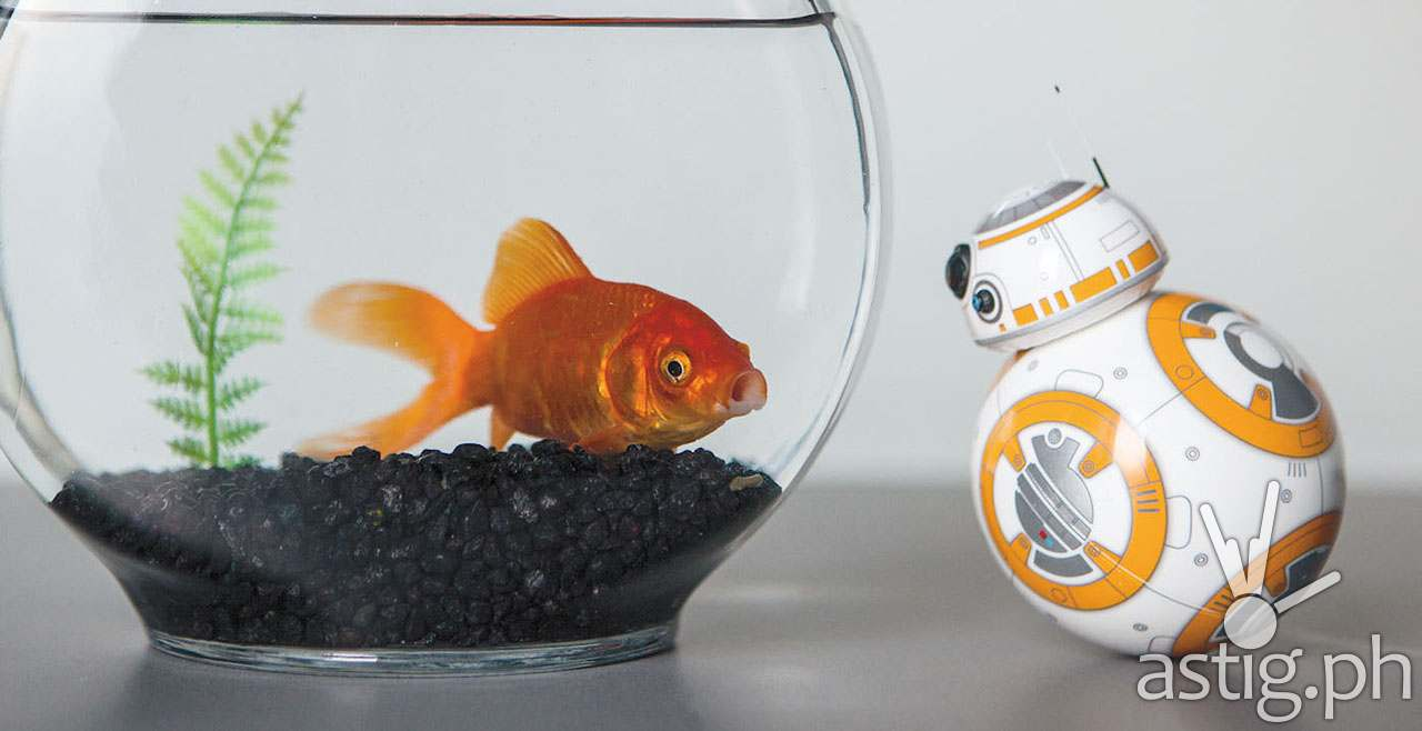 BB8 Droid from Star Wars The Force Awakens