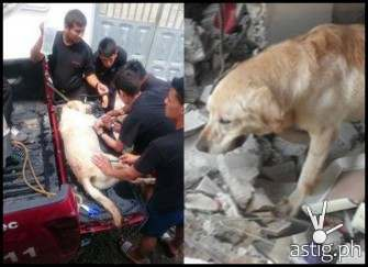 Hero Dog dies after saving 7 People in Ecuador Earthquake