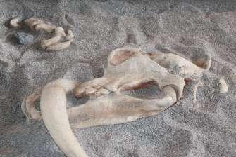 Bone sandbox - Dinosaurs Around The World exhibit - Mind Museum BGC