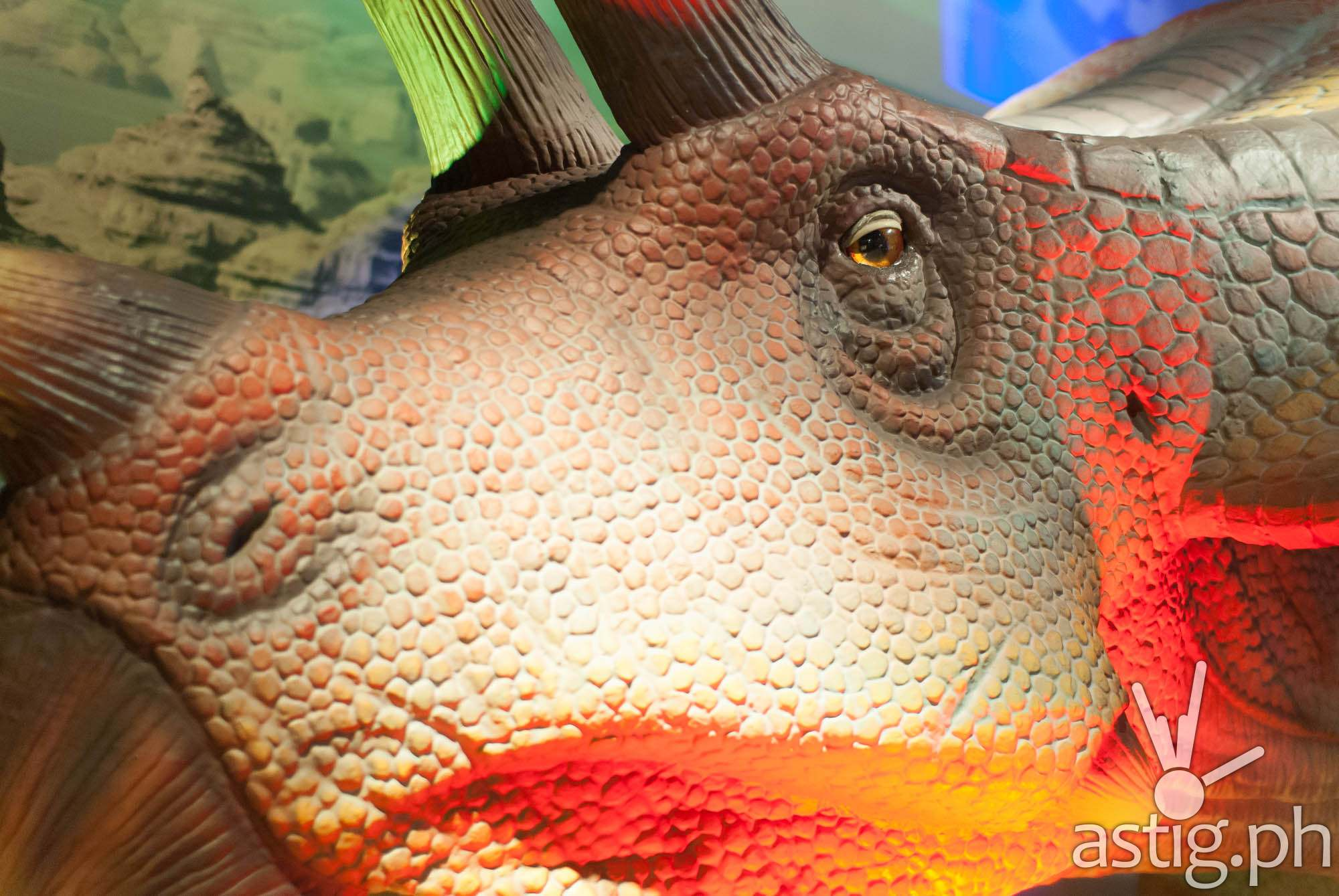 Triceratops - Dinosaurs Around The World exhibit - Mind Museum BGC