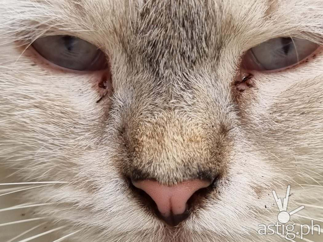 Cat close-up sample photo - Samsung Galaxy S21+ 5G