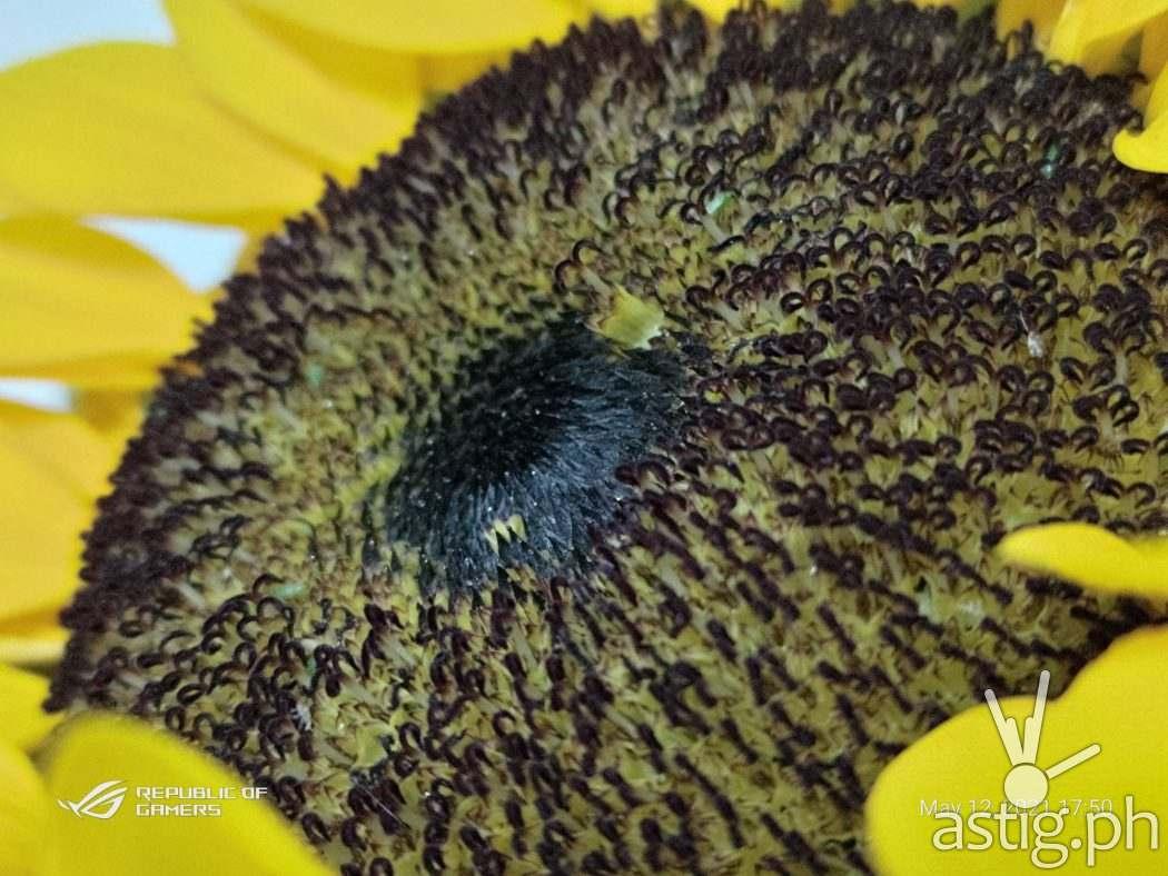 Sunflower ultra macro - ROG Phone 5 sample photo
