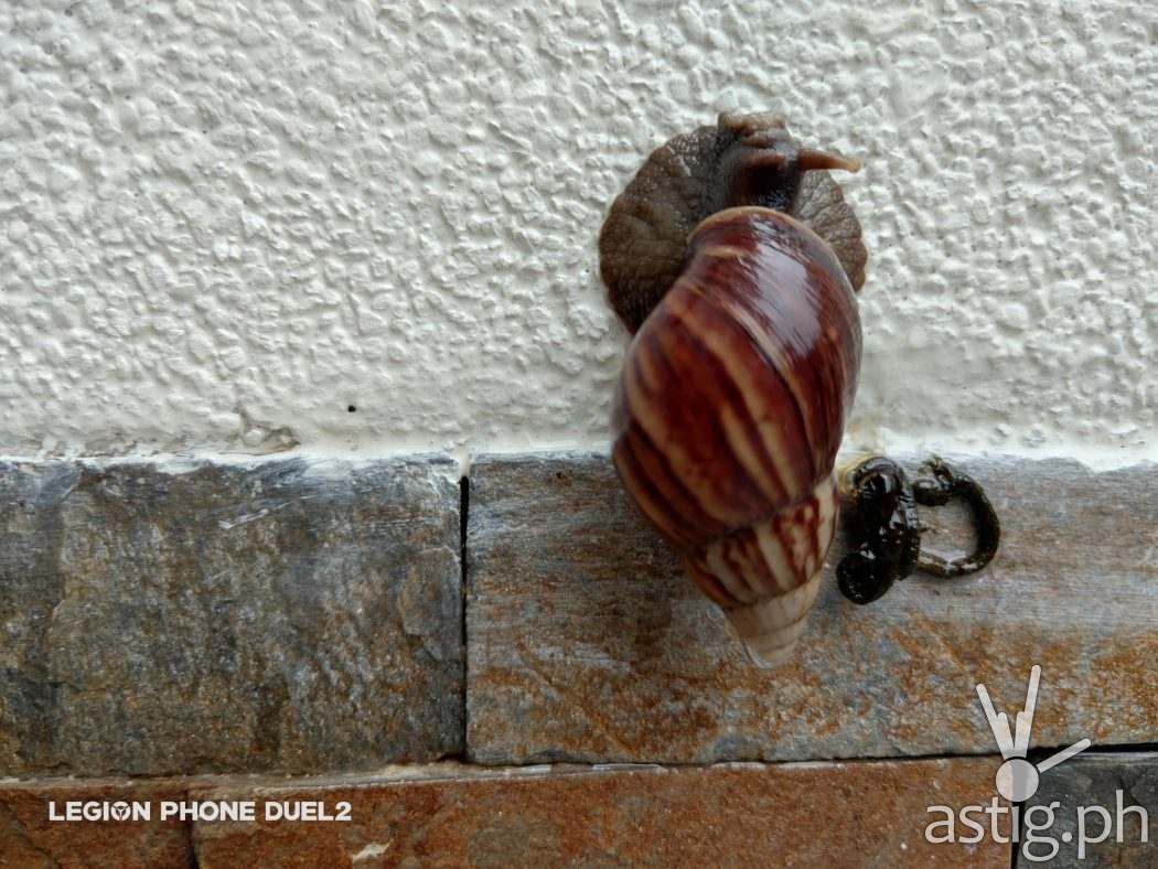 Snail macro - Lenovo Legion Duel 2 sample photo